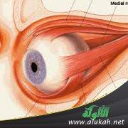 7da6475dae1bf أخطاء وأوهام شائعة حول العين والرؤية