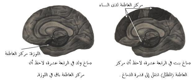 التعليم المختلط في الصفوف الأولية نظرات علمية (1) - شبكة ومنتديات ...