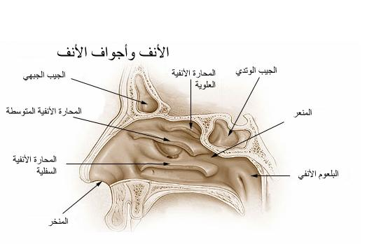 Image result for ?الأنف?